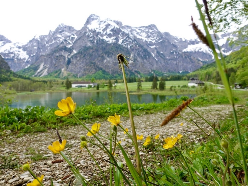Gelbe Blumen mit See und Bergpanorama