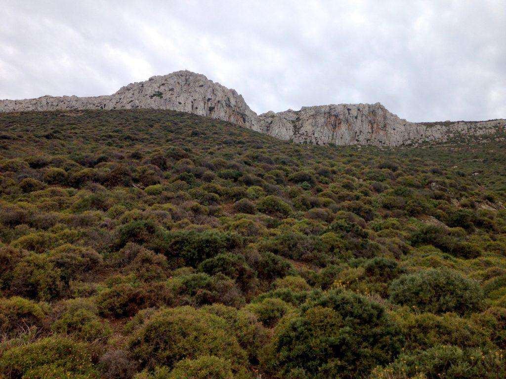 Ein Hügel voll Kräuter beim Kloster Aigos Ioannis