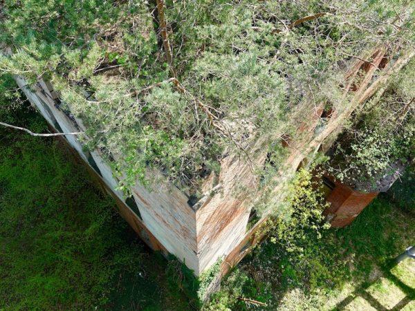 Baum und Zeit Baumkronenpfad: Alpenhaus