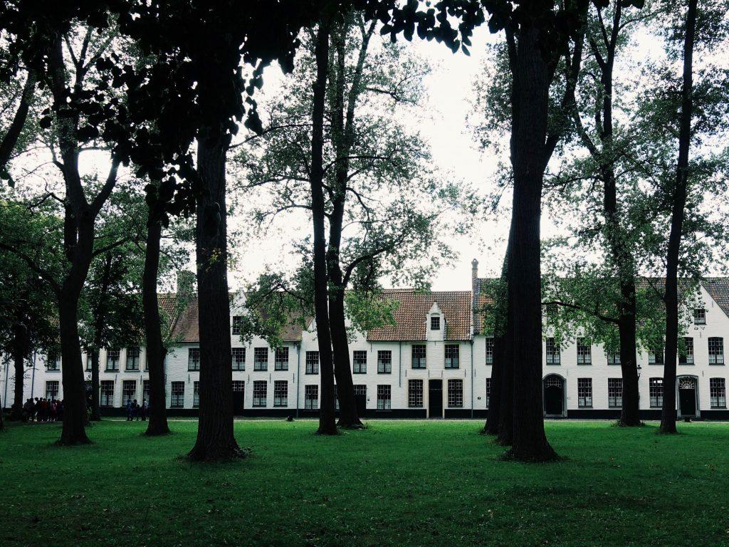 Weiße Häuser im Hintergrund, hohe dunkle Bäume in der Mitte der Hofanlage auf einer Wiese