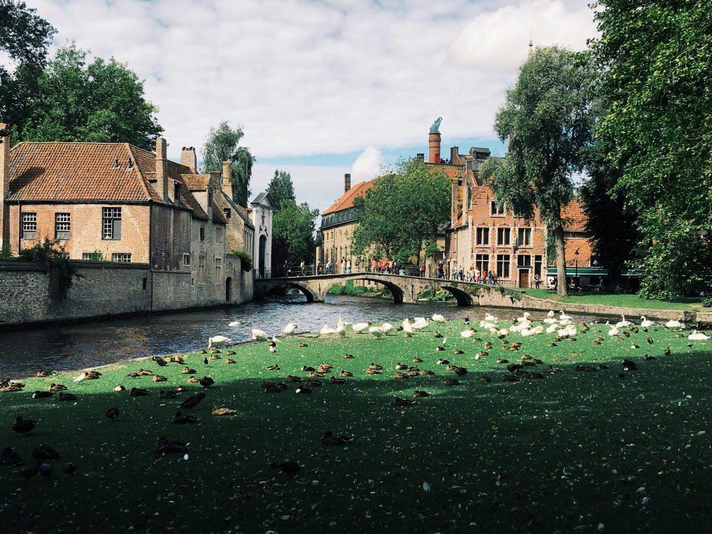 Eine Wiese voll von Enten und Schwänen vor einem Kanal über den im Hintergrund eine Brücke führt