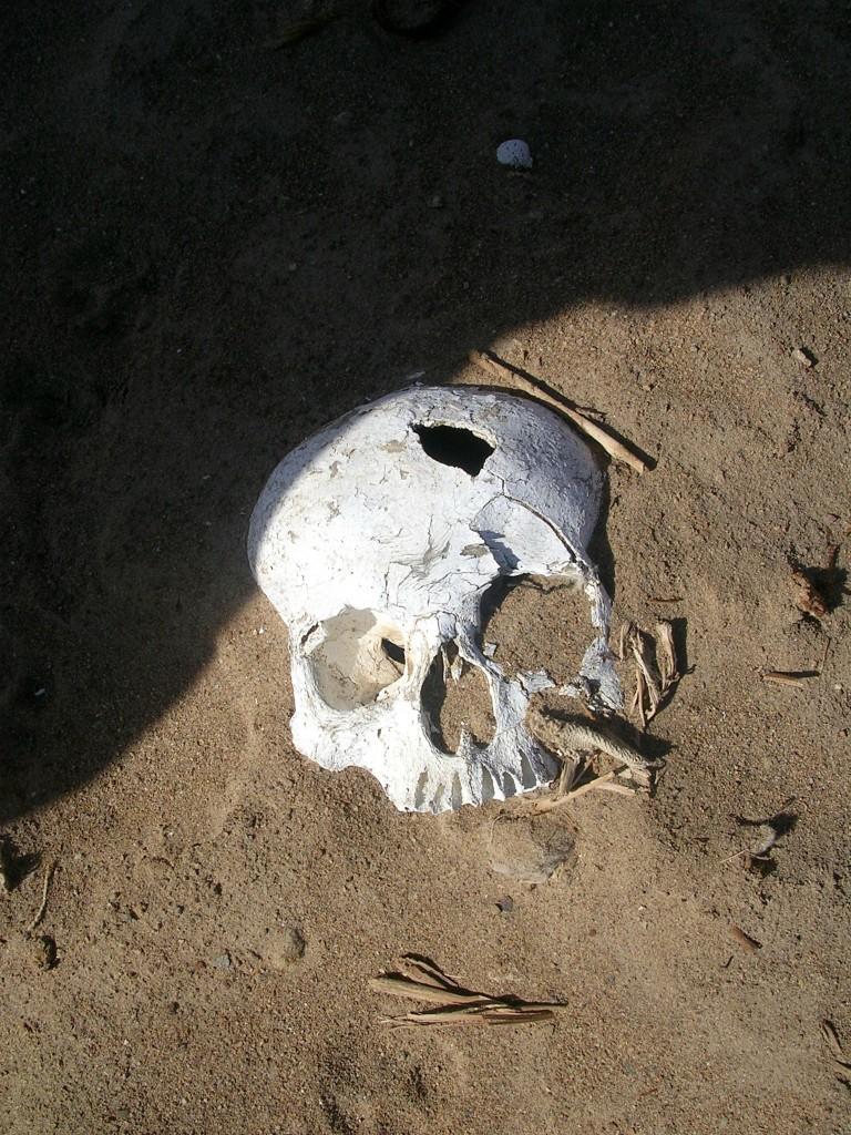 Schädelknochen auf einem Wari Friedhof in der Nähe von Querulpa