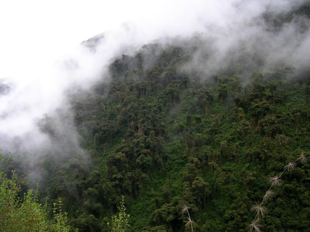 High Jungle am Salkantay Trek