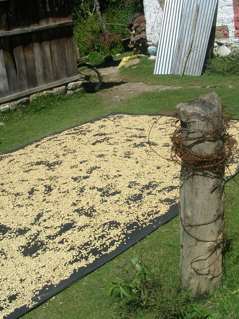 Kaffeebohnen trocknen in der Sonne am Salkantay Trek