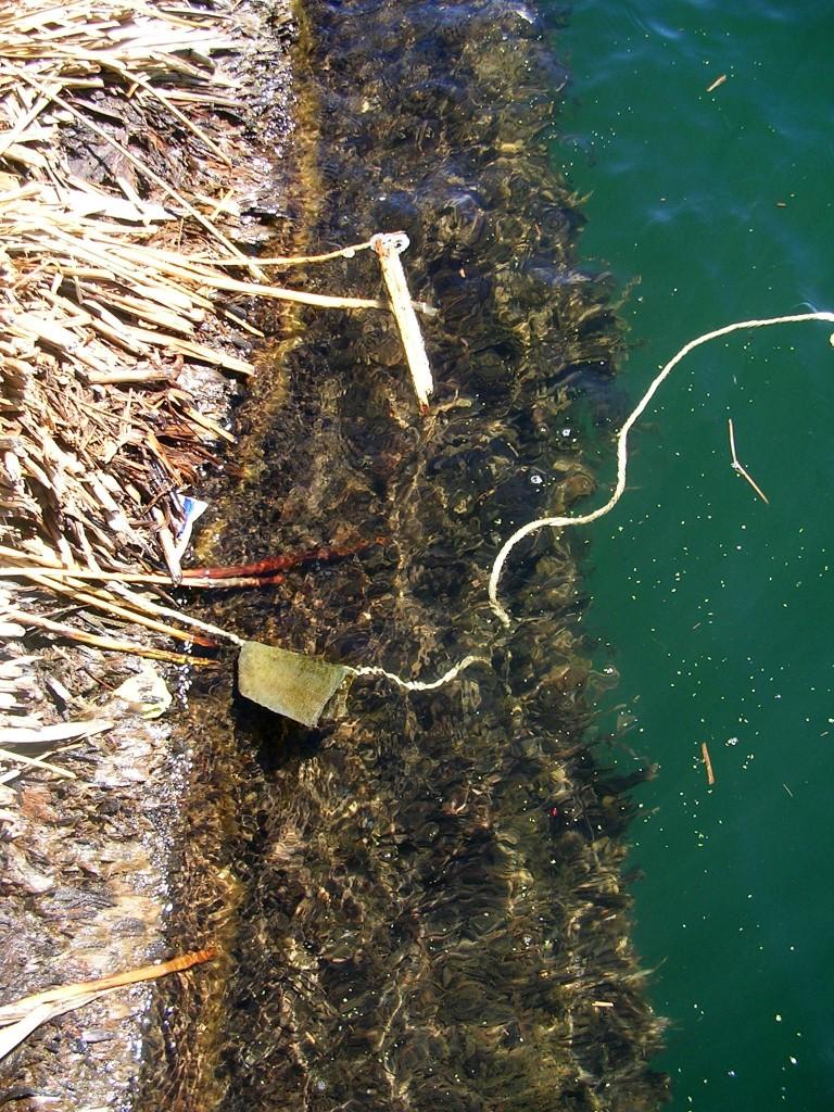 Schwimmende Schilfschicht der Uro Inseln