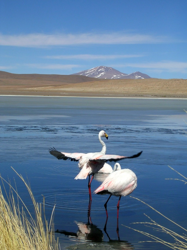 Laguna Canapa in der Salar de Uyuni