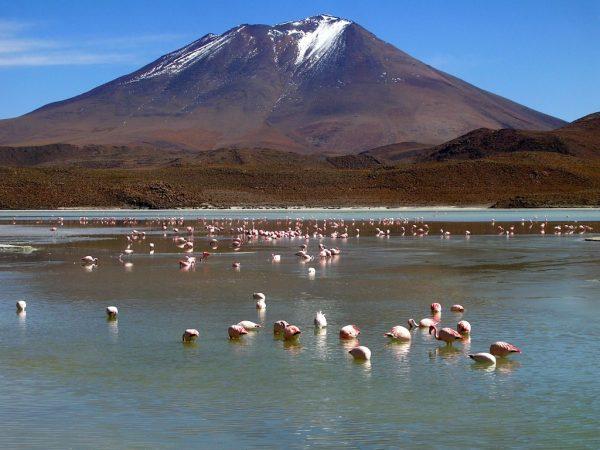 Laguna Hedionda in der Salar de Uyuni