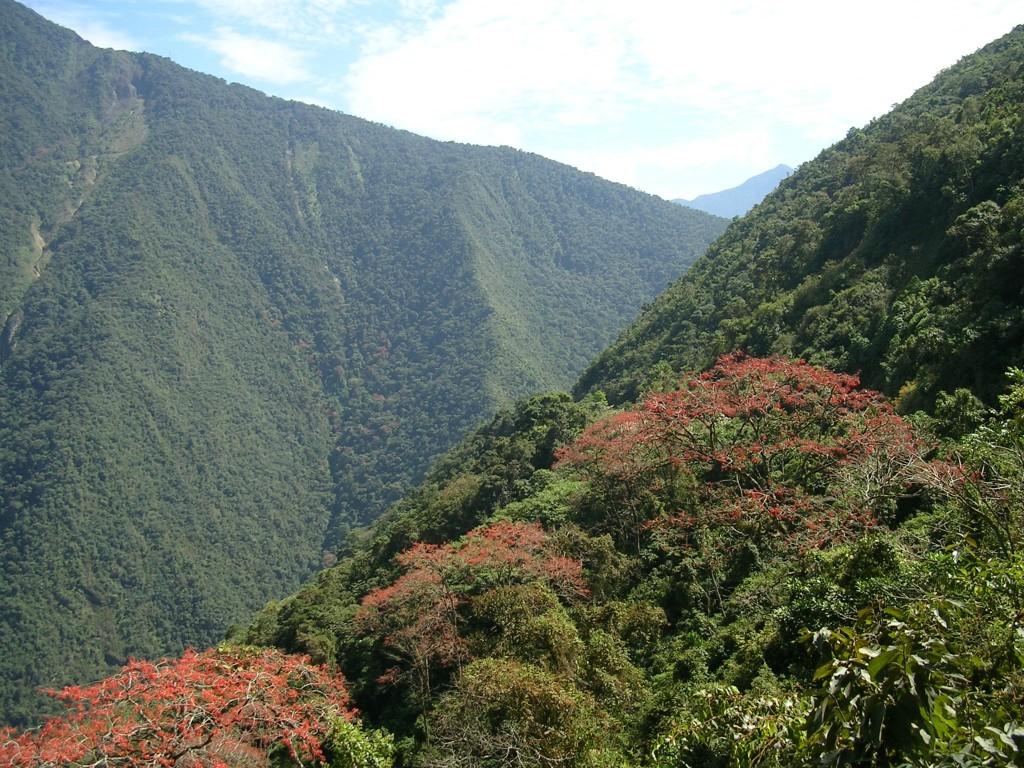 Ausblick in den Yungas