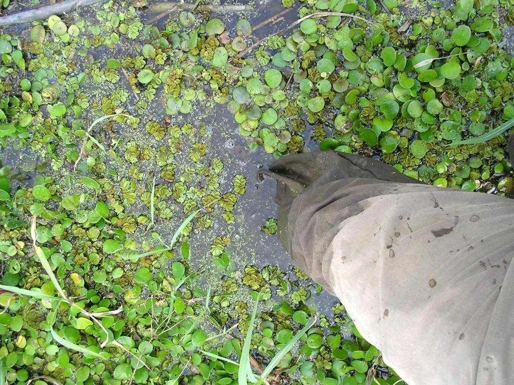 Auf der Suche nach einer Anaconda watend durch den Sumpf