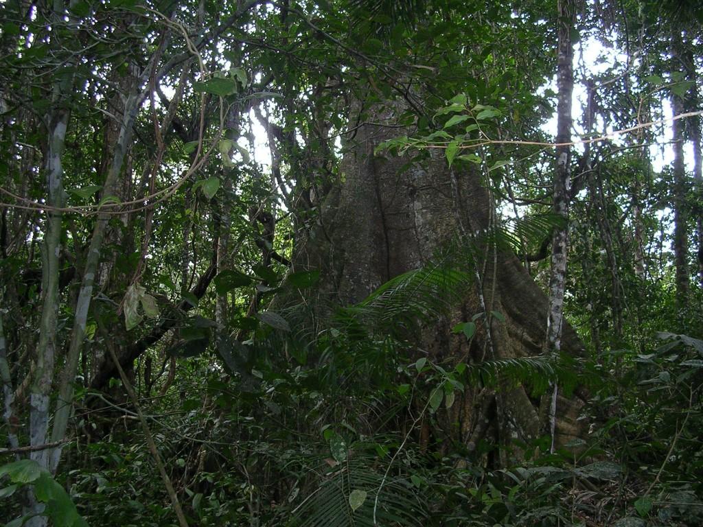 Im Dschungel des Madidi Nationalparks