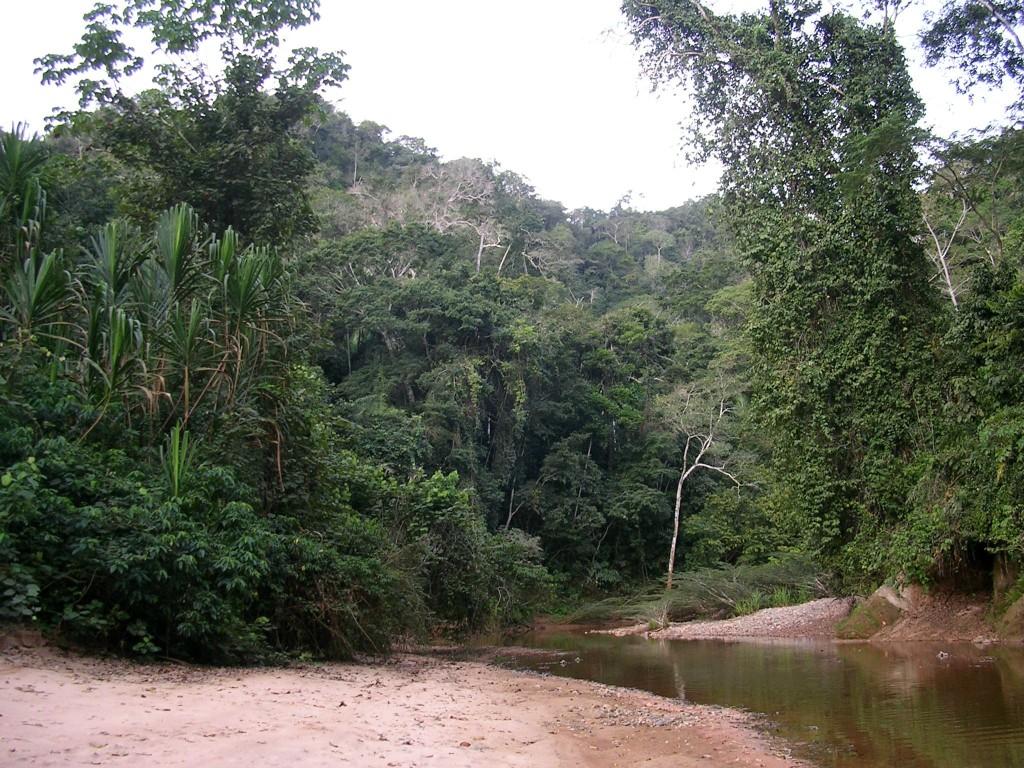 Bachverlauf im Dschungel bei Rurrenabaque