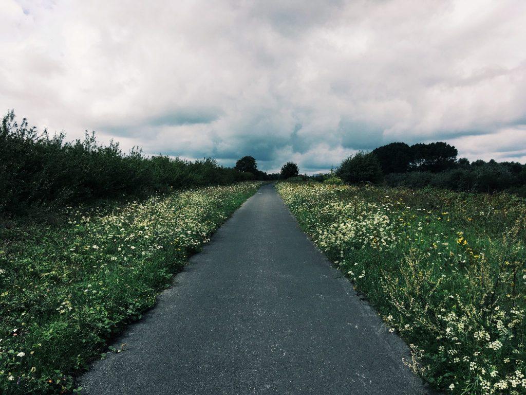 Ein asphaltierter Weg durch eine Blumenwiese