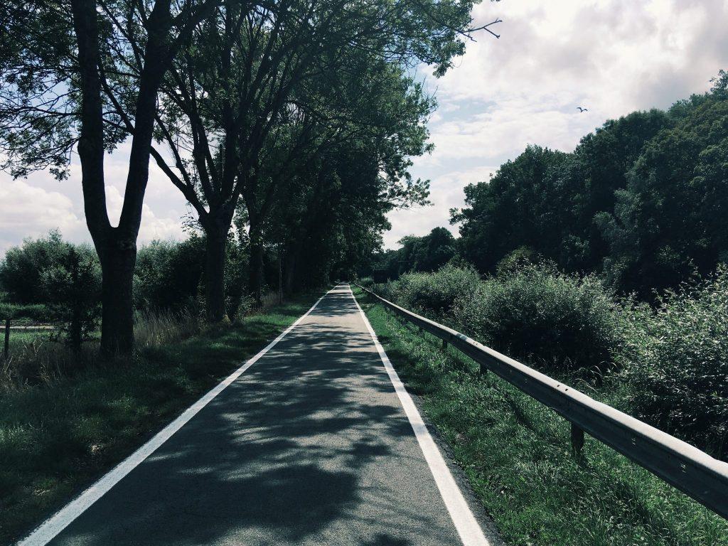 Eine kleine, gerade Straße gesäumt von Bäumen
