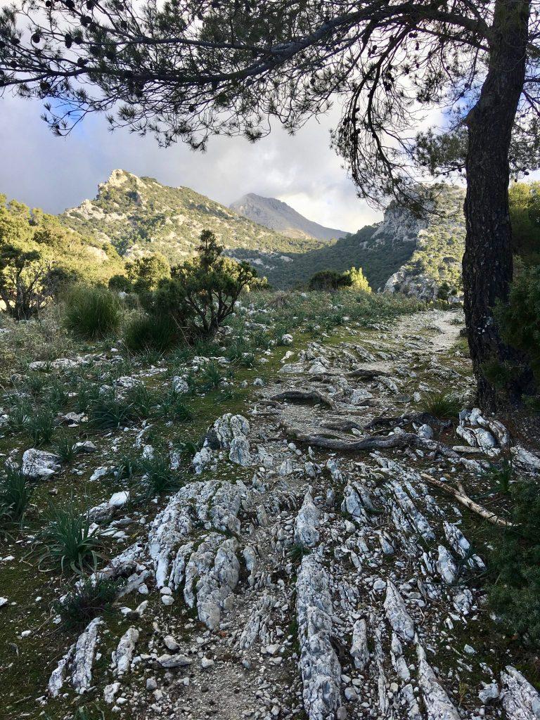 GR 221: Coll de Sa Basola