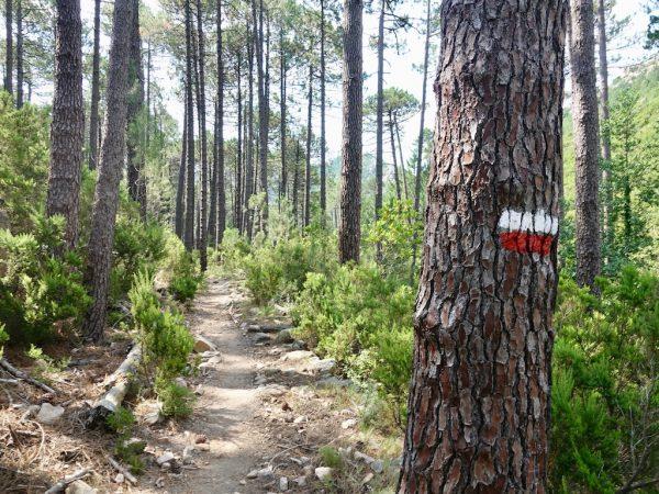 GR20: Rot-weiße Markierung an einem Baum im Südteil