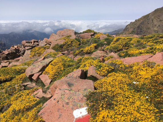 Die besten Tipps fürs Wandern am GR20 auf Korsika