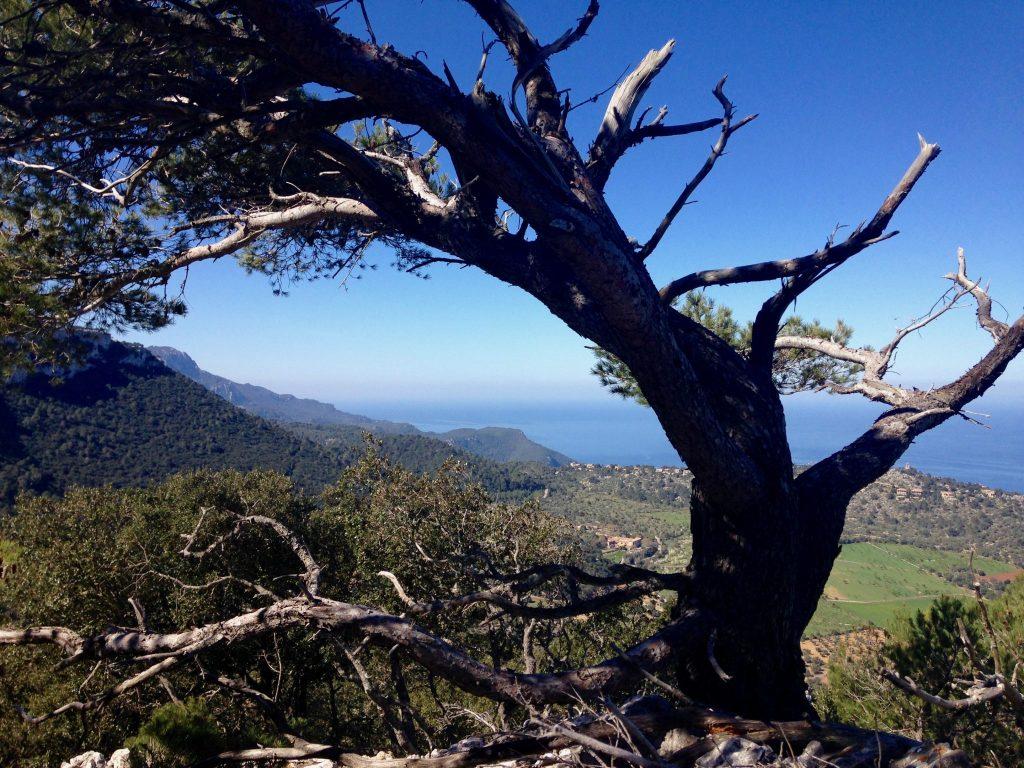 Ein Baum und eine schöne Aussicht am Weg von Esporles nach Valldemossa