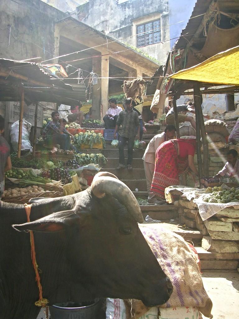 Kuh am Markt in Varanasi