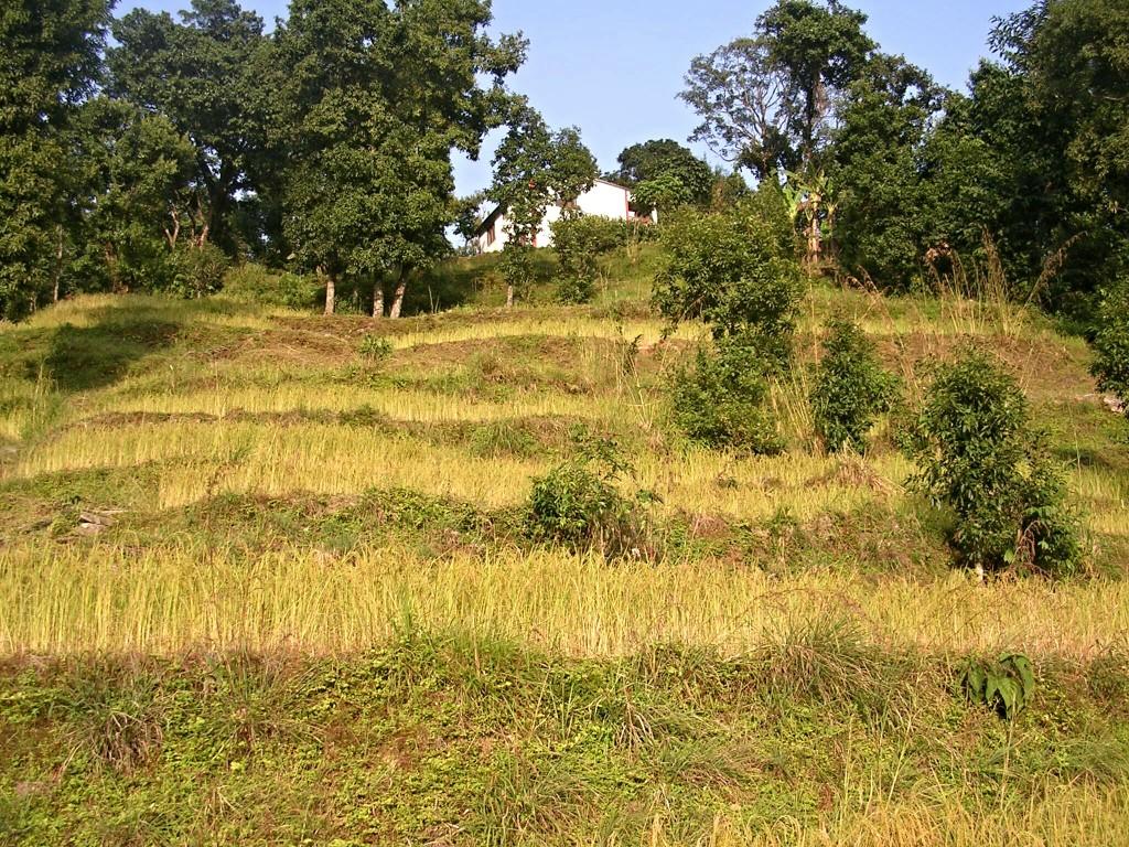 Felder am Weg nach Naugdada