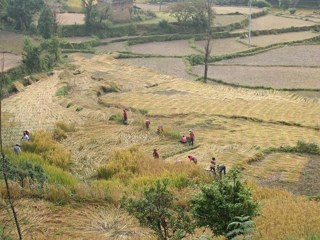 Frauen arbeiten am Feld