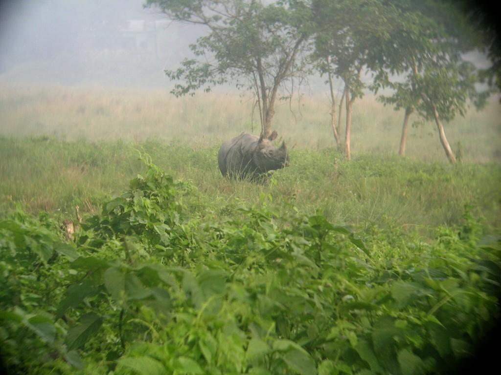 Einhörniges Nashorn im Chitwan Nationalpark