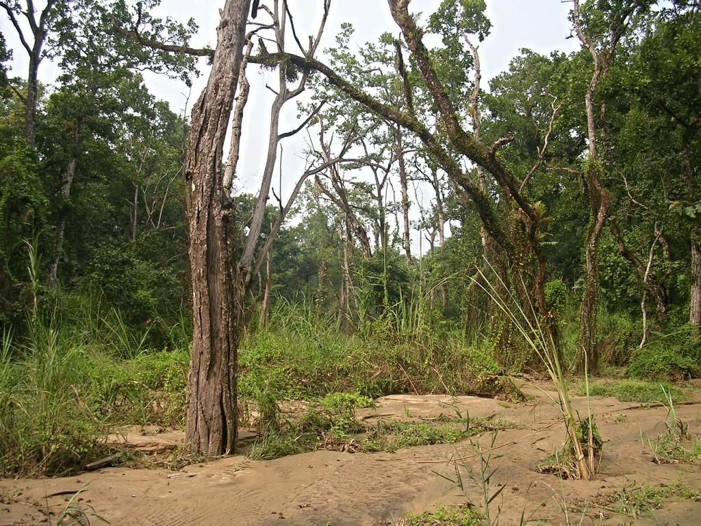 Dschungel in Chitwan