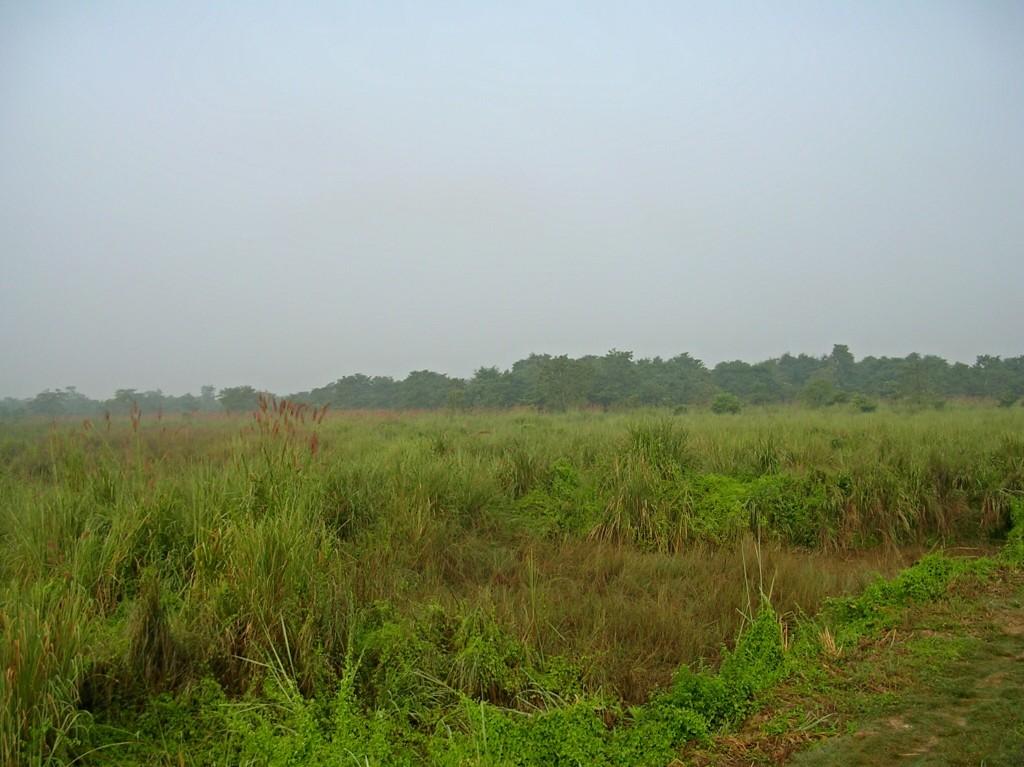 Graslandschaft im Chitwan National Park