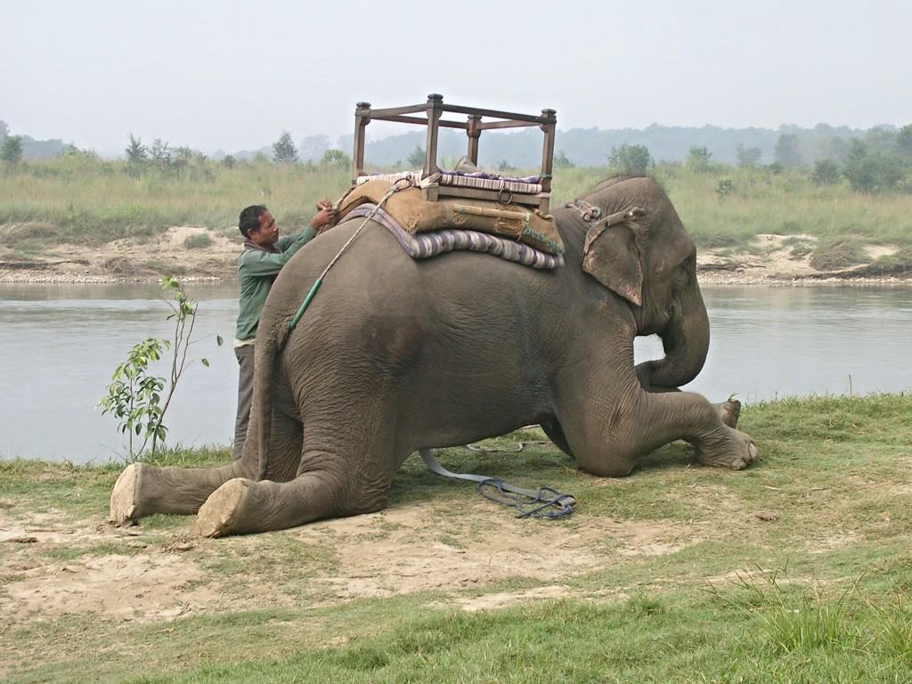 Kniender Elefant mit Korb in Chitwan