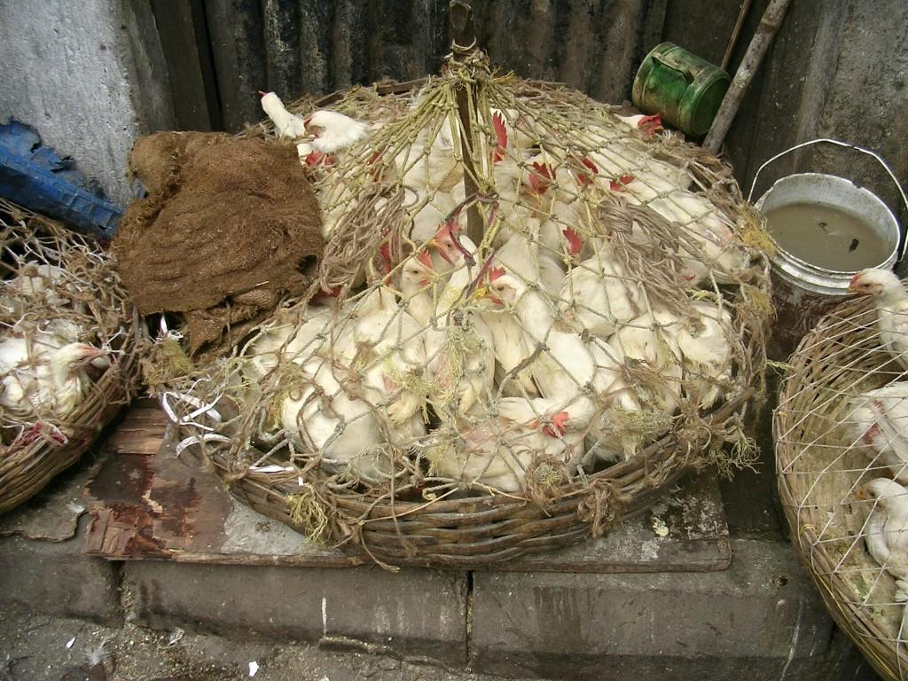 Hühner im Korb