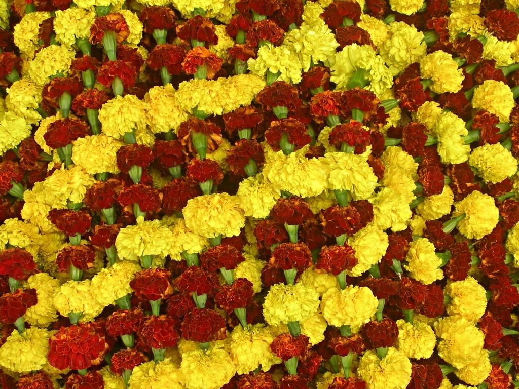 Rote und gelbe Blumen am Blumenmarkt in Kalkutta