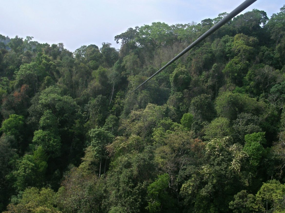 Zip-Line in Huay Xai