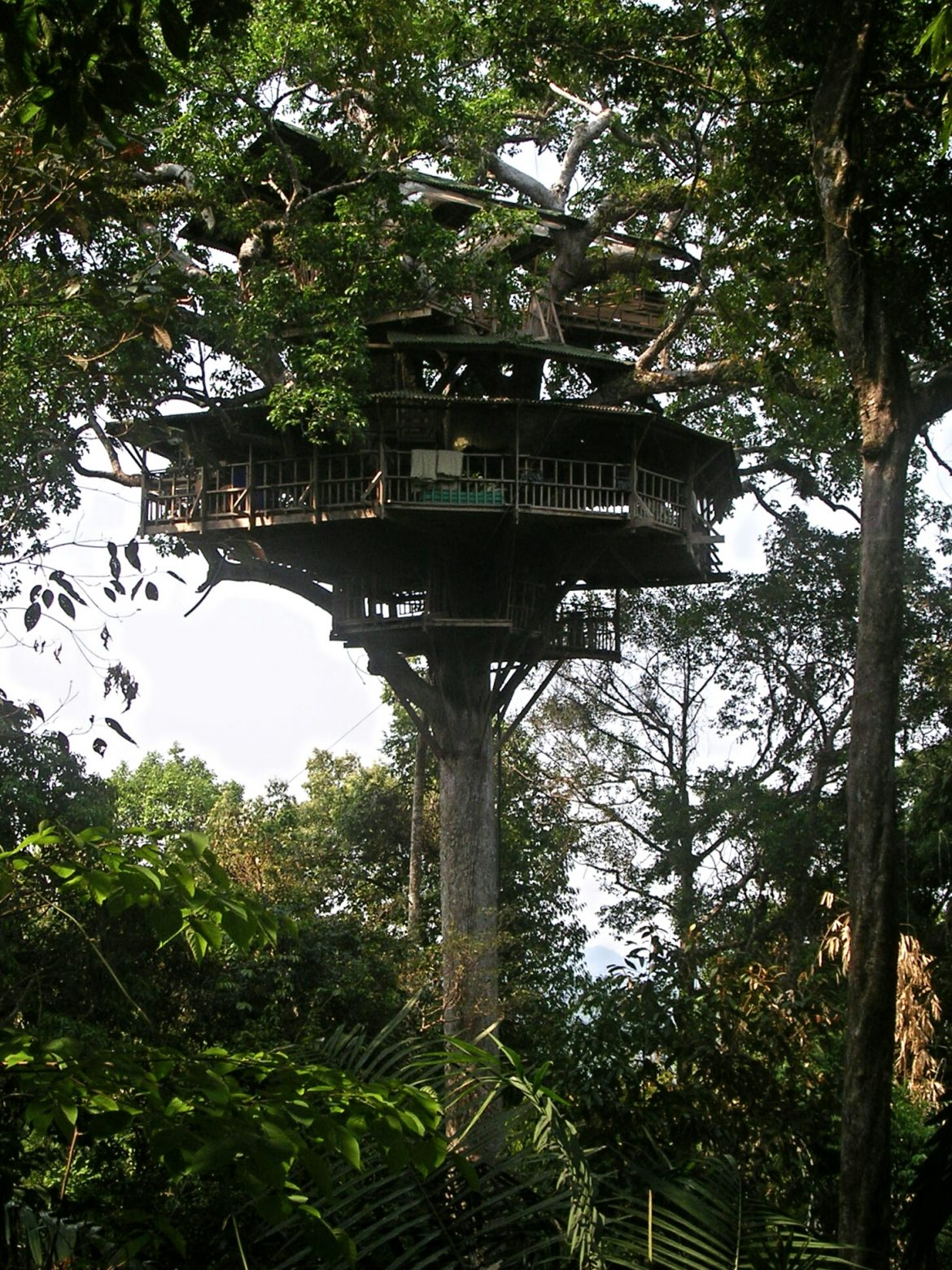 Baumhaus von Gibbon Experience Huay Xai