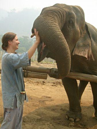 Elefant füttern in der Elefantenschule