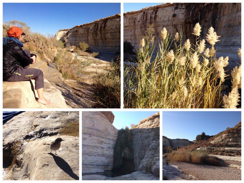 Collage des kleinen Canyons bei der Quelle Ein Akev mit mir, Schilf, Vogel und dem Pool