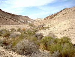 Grüne Büsche in der Wüstenlandschaft im Zin Tal