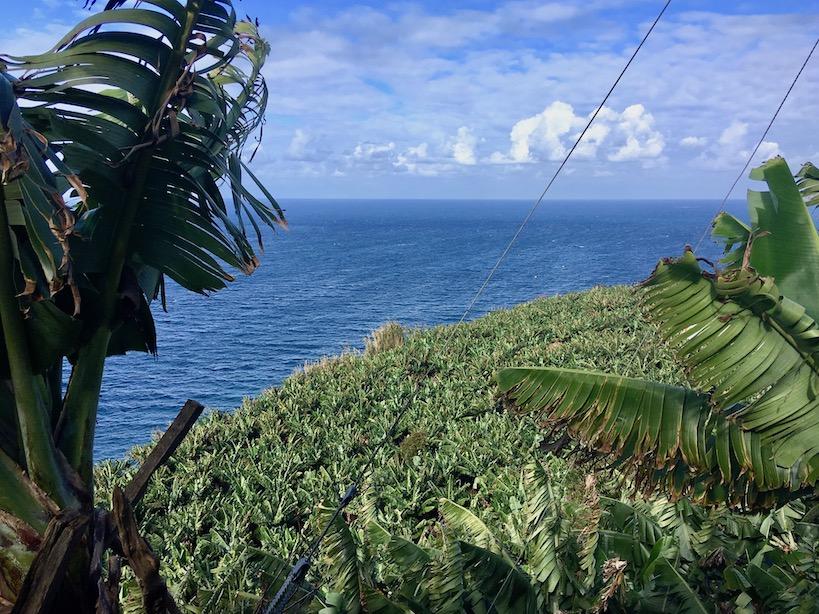 Blätter eines Bananenbaumes am Rand mit blauem Meer