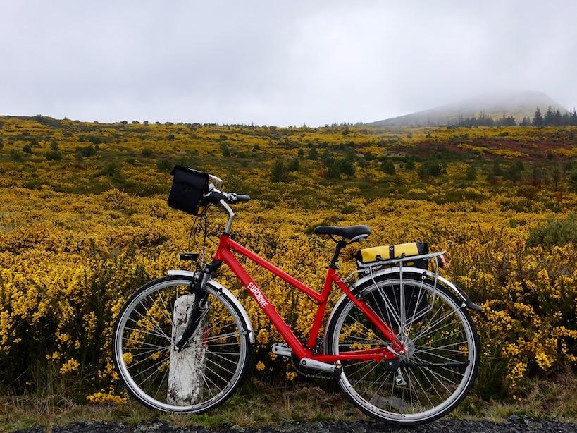 Ein rotes Rad vor einer Fläche voll gelben Ginster bei düsterem grauen Wetter