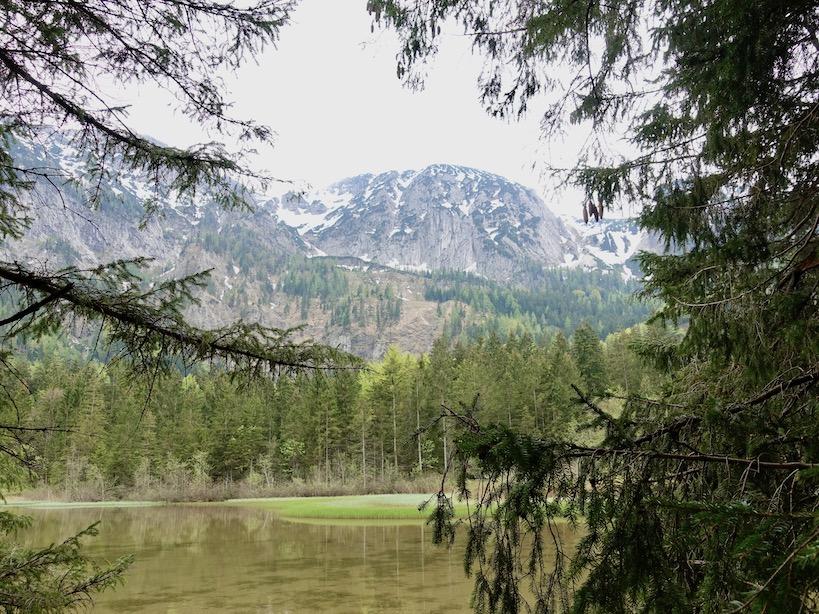 Blick durch Nadelbaumäste auf See und Berg