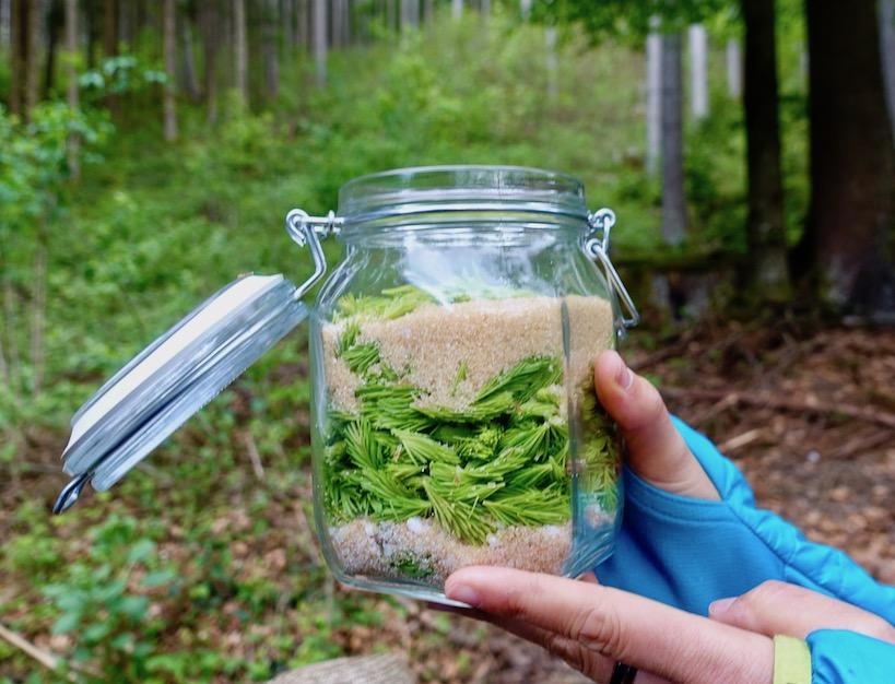 Glas mit Maiwipferl und Zucker wird in einem Wald in die Höhe gehalten