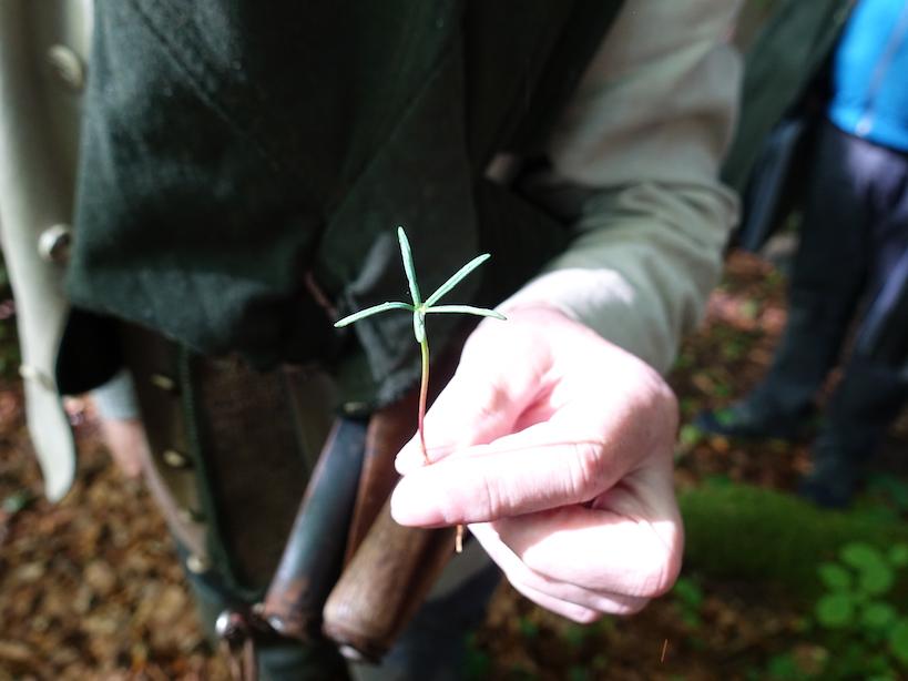 Baum-Baby mit 5 Mini-Blättern in einer Hand